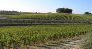 Vineyards in autumn, Castelnuovo Berardenga, Siena. Autore e Copyright Marco Ramerini