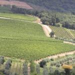 Viñedos , Castellina in Chianti, Siena. Autor y Copyright Marco Ramerini