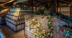Museo Sensoriale e Multimediale del vino di Bolgheri e della Costa Toscana