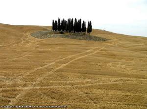 Julio, campo cerca de San Quirico d'Orcia, Val d'Orcia, Siena. Autor y Copyright Marco Ramerini