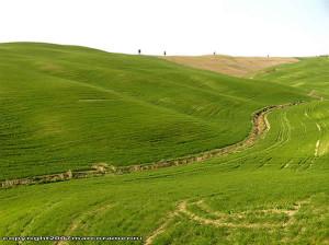 Marzo, campo cerca de San Quirico d'Orcia, Val d'Orcia, Siena. Autor y Copyright Marco Ramerini.