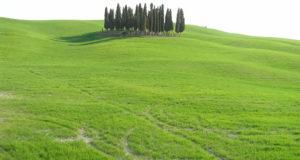 Marzo Campagna nei pressi di San Quirico d'Orcia, Val d'Orcia, Siena. Autore e Copyright Marco Ramerini