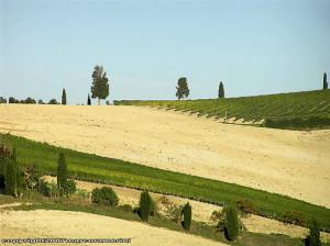 Octubre, campo cerca de San Quirico d'Orcia, Val d'Orcia, Siena. Autor y Copyright Marco Ramerini