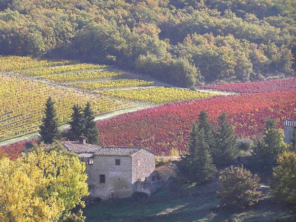 Camino entre San Donato y Castellina in Chianti, en noviembre, de Barberino Val d'Elsa, Florencia. Autor y Copyright Marco Ramerini.