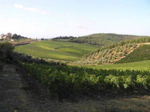 Weinberge im Spätsommer, Radda in Chianti, Siena. Autor und Copyright Marco Ramerini