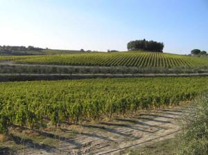 Vignobles à l'automne, Castelnuovo Berardenga, Sienne. Auteur et Copyright Marco Ramerini