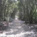 Il sentiero poco prima di giungere a Cala Violina, Scarlino, Grosseto. Author and Copyright Marco Ramerini