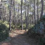 La pineta di Punta Ala, Castiglione della Pescaia. Author and Copyright Marco Ramerini