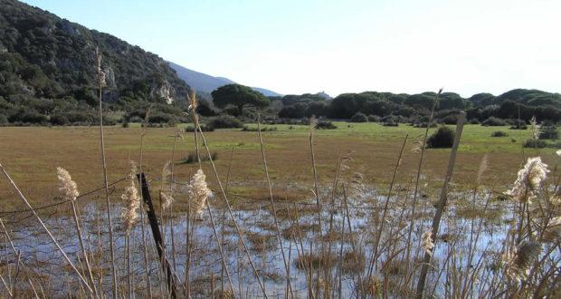 Marsh, Maremma Park, Grosseto. Author and Copyright Marco Ramerini