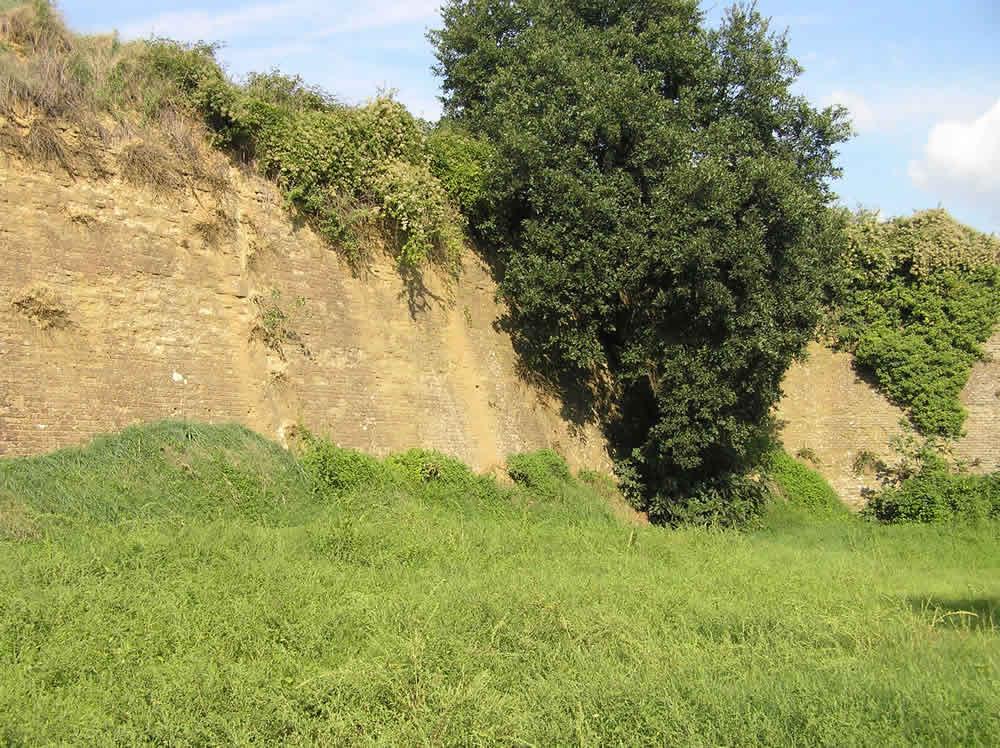 Le mura a sud sono in cattivo stato di conservazione e sono ricoperte di vegetazione. Fortezza di Poggio Imperiale, Poggibonsi, Siena. Author and Copyright Marco Ramerini