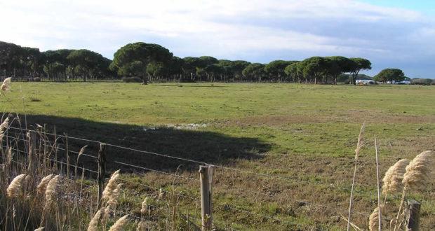 Pineta, Parco della Maremma, Grosseto. Author and Copyright Marco Ramerini