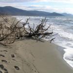 Spiaggia, Parco Naturale della Maremma, Grosseto.. Author and Copyright Marco Ramerini