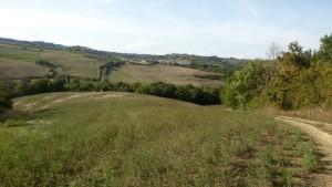 Salendo verso La Torre. Via Francigena da Gambassi a San Gimignano.