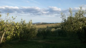 Veduta verso San Gimignano. Via Francigena da Gambassi a San Gimignano.