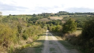 Via Francigena da Gambassi a San Gimignano