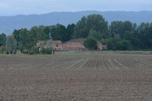 Tabaccaia, Padule di Fucecchio. Autore e Copyright Daniele Marchi