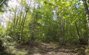 Il sentiero lungo il bosco, Anello di Cintoia, Greve in Chianti. Autore e Copyright Marco Ramerini