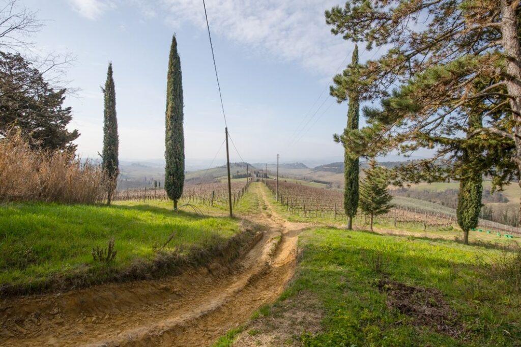 Il tratto dell'antica Strada Regia che collegava i poderi della Fornace e del Poderaccio (Foto: Marco Ramerini)