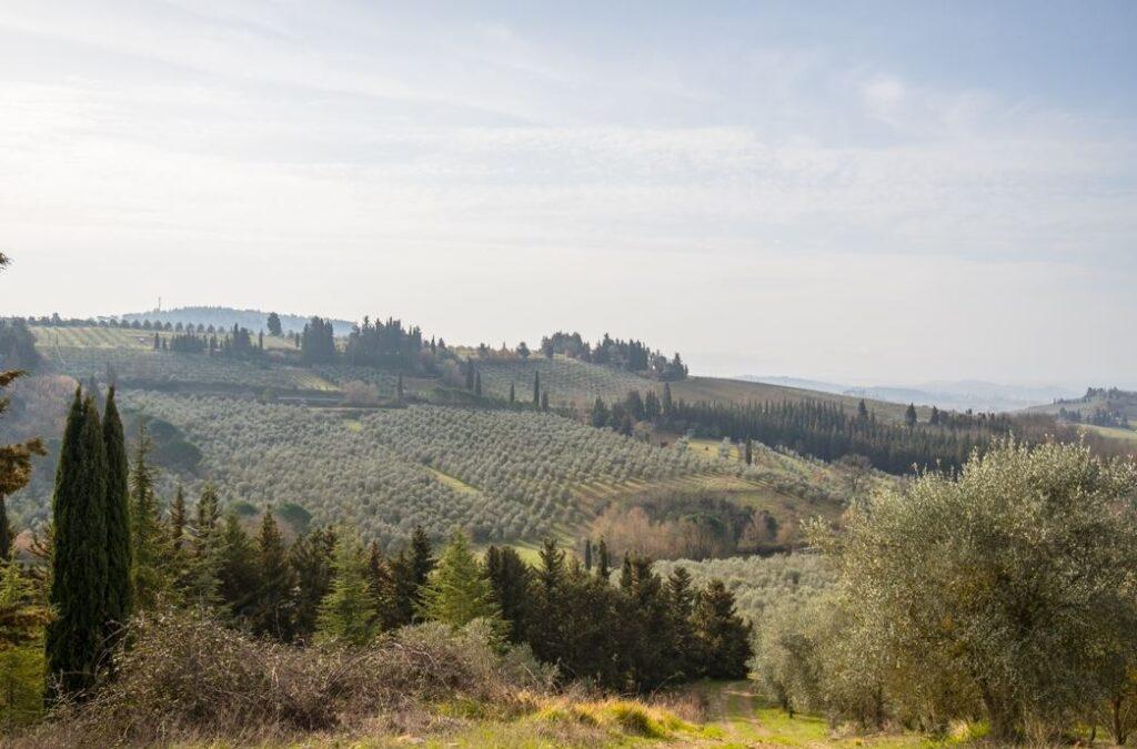 La collina dove si trova il Podere della Fornace (Foto: Marco Ramerini)