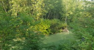 Il fiume Elsa